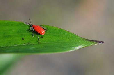 Insektenschutz passend für jedes Bedürfnis